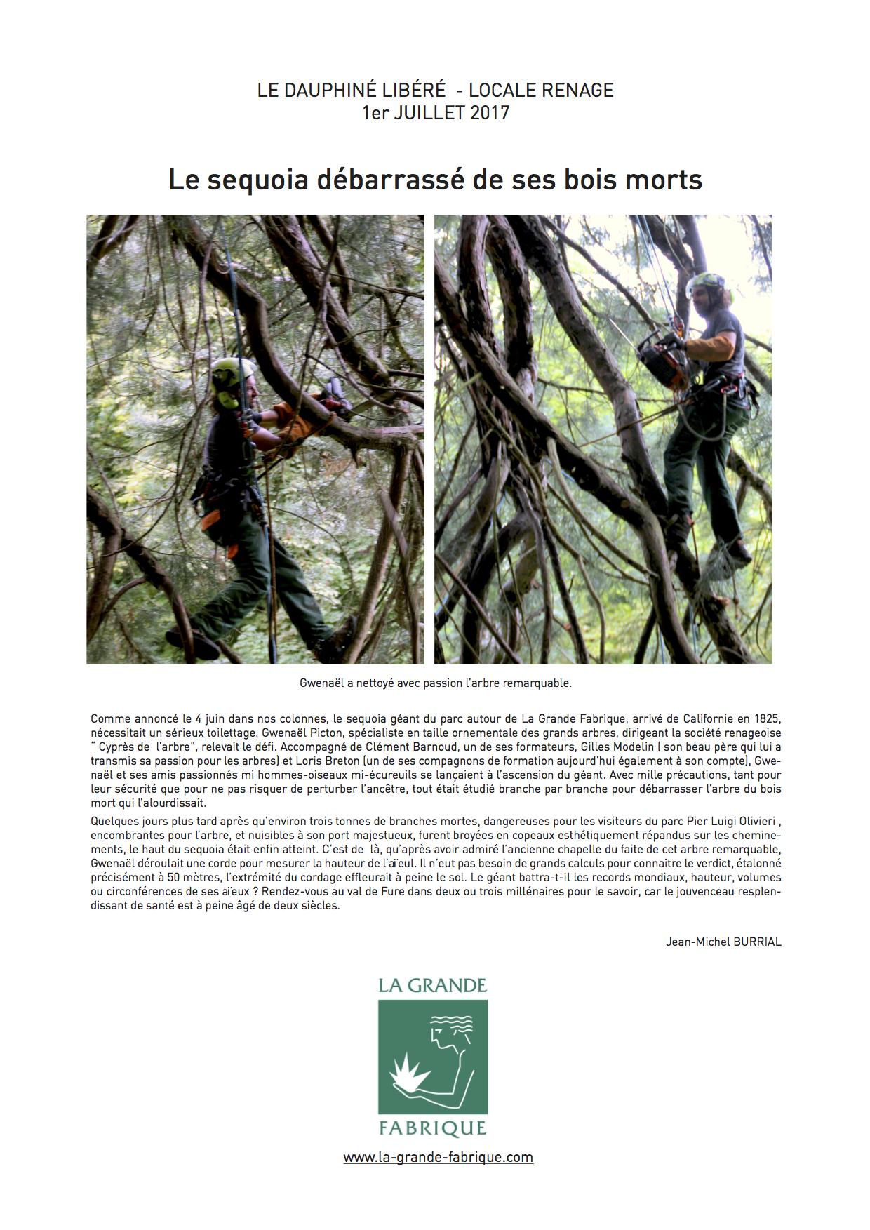 Le sequoia débarrassé de ses bois morts